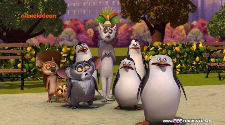 Пингвины Мадагаскара [S02] | HDTVRip