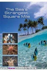 Nat Geo Wild: Самое странное место в океане | SATRip