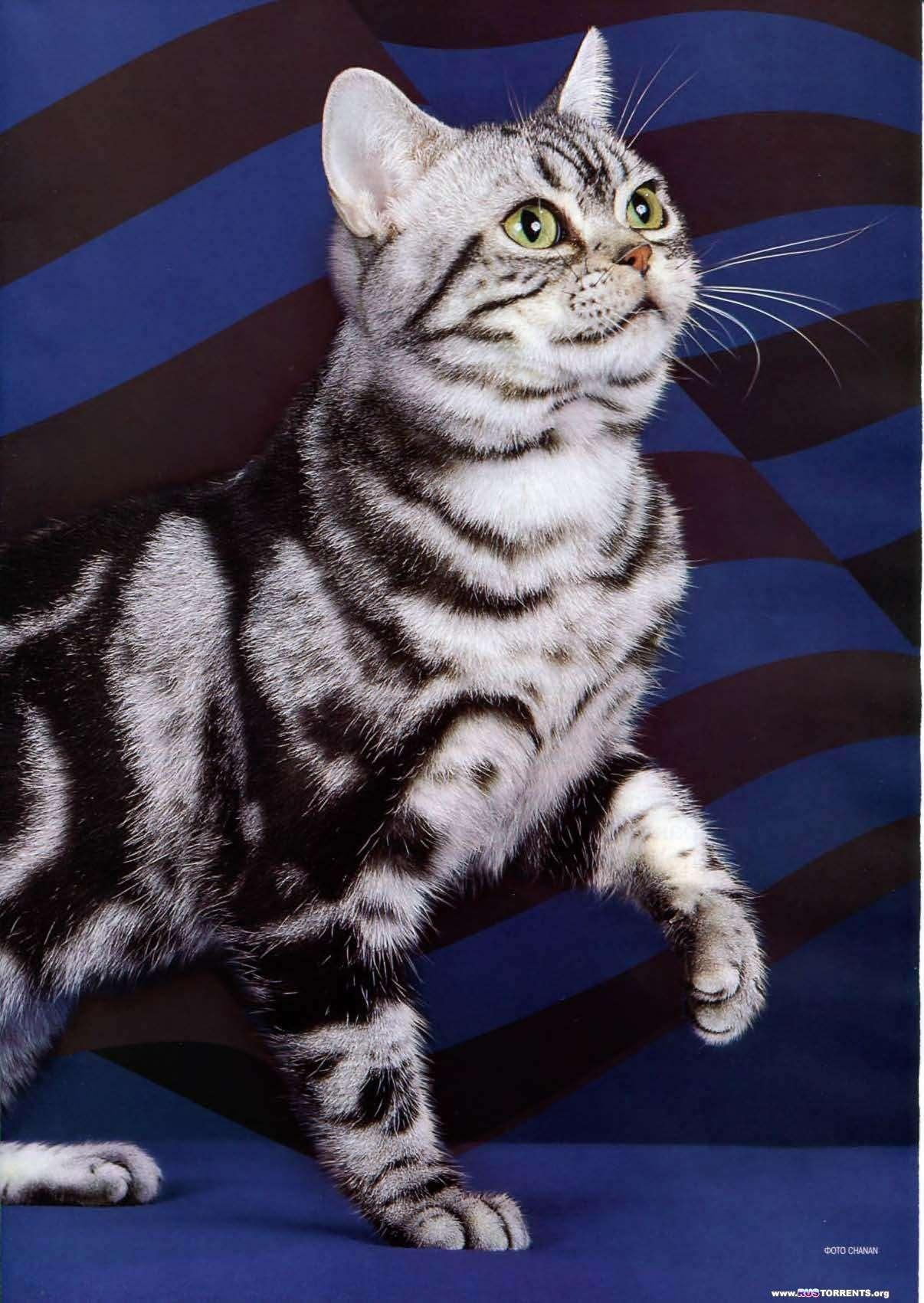 Мой друг кошка №10