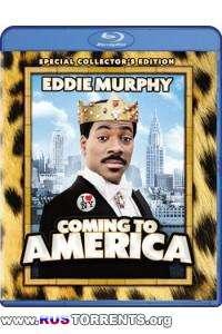 Поездка в Америку | BDRip 1080p