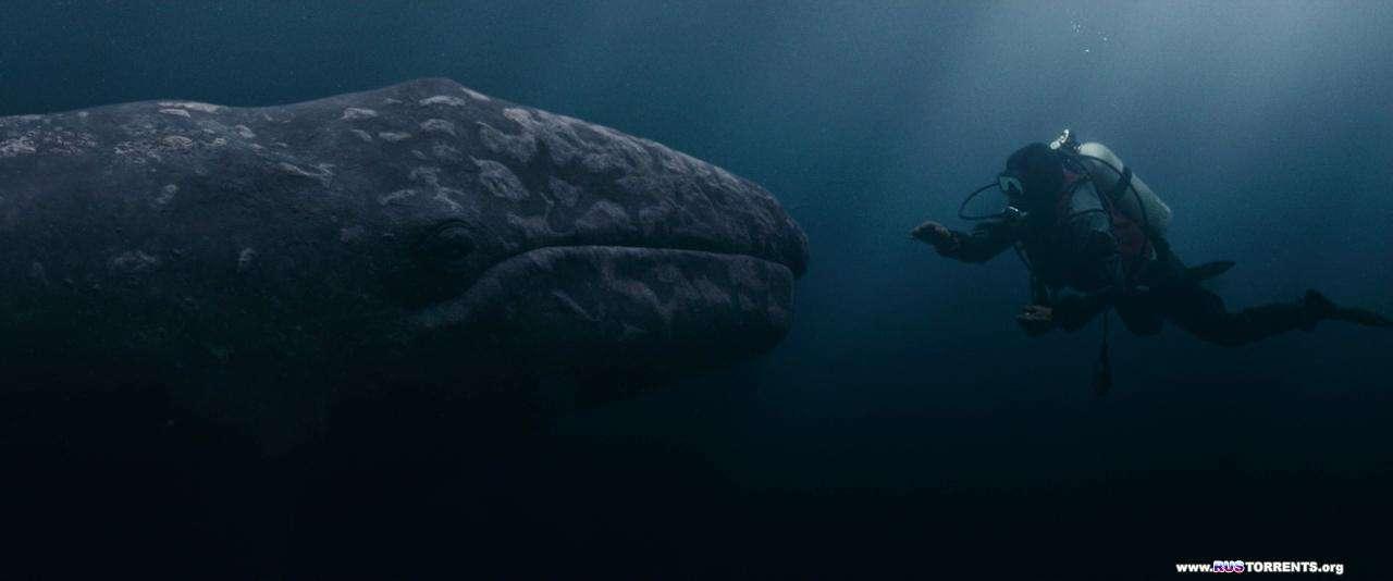 Все любят китов | BDRip 720p | Лицензия
