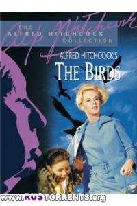 Птицы | BDRip-AVC 720р