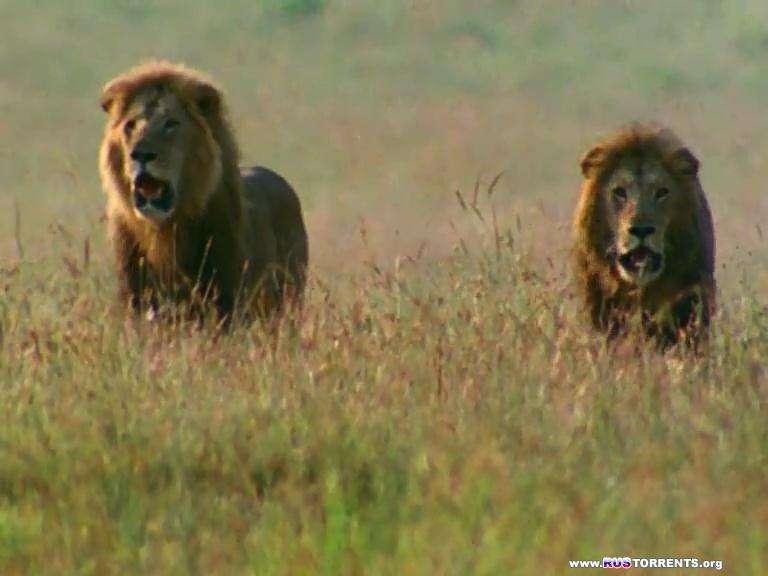 BBC: Поле битвы. Львы | DVDRip-AVC