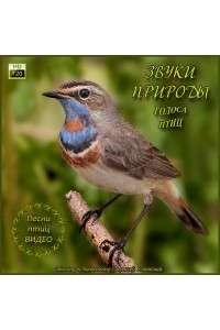 Звуки природы - Голоса птиц - Пение птиц на видео | WEBRip 720p