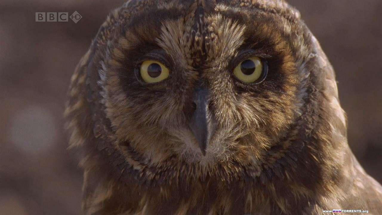 BBC: Галапагосы. Рождённые огнём | 1 сезон | 1 эпизод из 3 | HDTVRip 720p