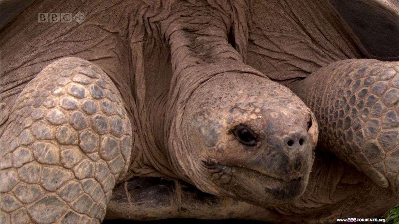 BBC: Галапагосы. Острова, которые изменили мир | 1 сезон | 2 эпизод из 3 | HDTVRip 720p