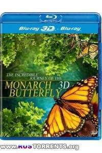 Полет бабочки | BDRip 1080p | 3D-Video | halfOU