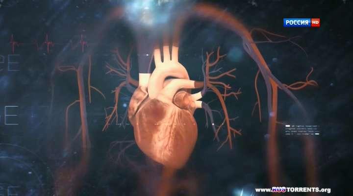 Шифры нашего тела. Сердце | HDTVRip