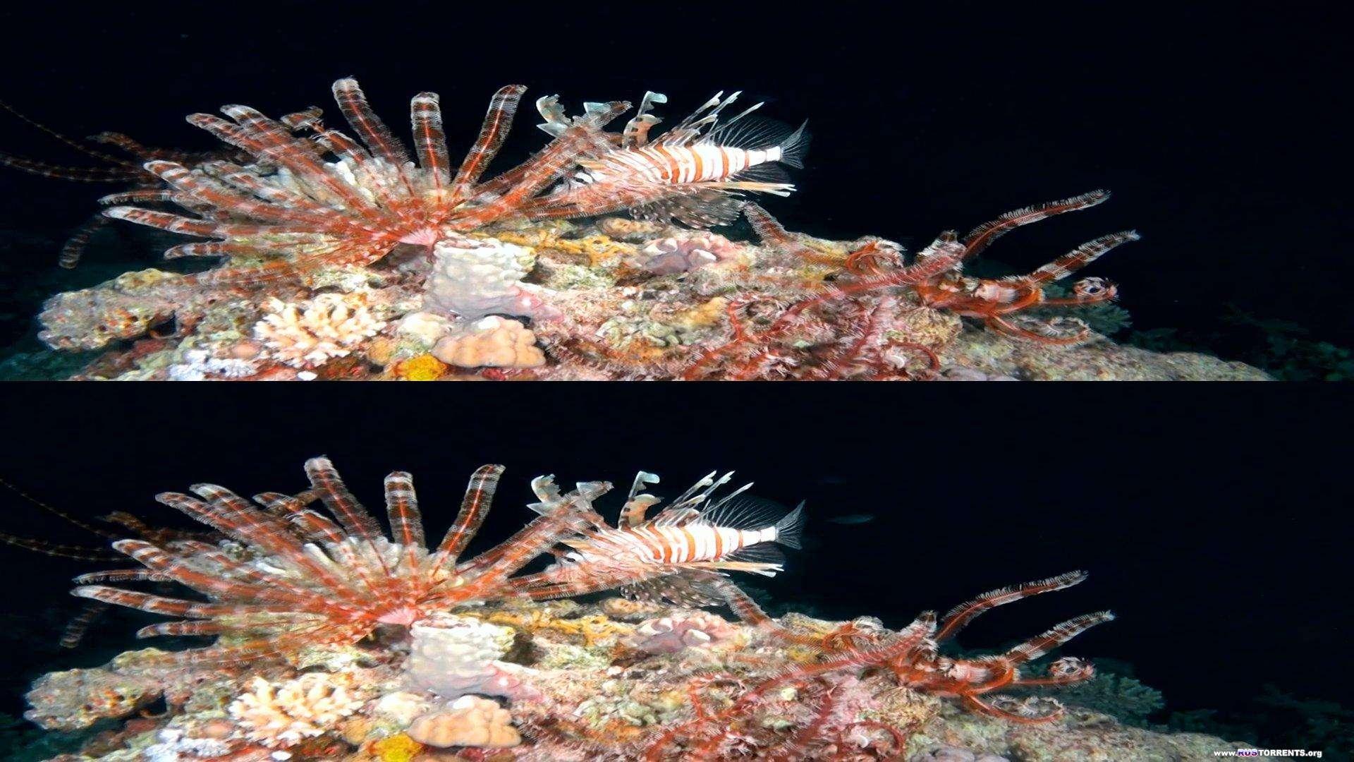 Коралловый риф 3D | BDRip 1080p | 3D-Video HOU