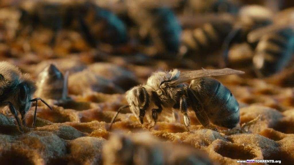 Больше чем мёд | BDRip-AVC