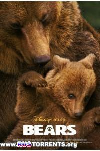 Медведи | BDRip 720p