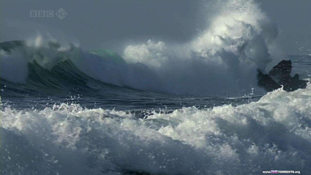 Морская выдра. Малышка на миллион.