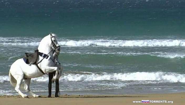 Как танцуют андалузcкие лошади | DVDRip