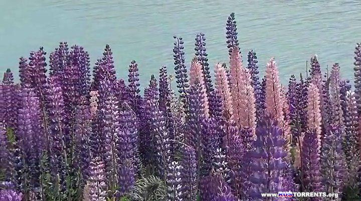 Новая Зеландия 3D: Забытый рай | BDRip