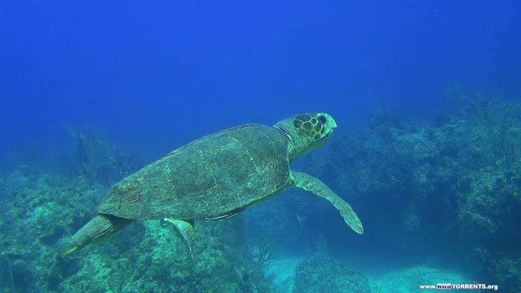 Багамские острова: Таинственные пещеры и затонувшие корабли | BDRip-AVC