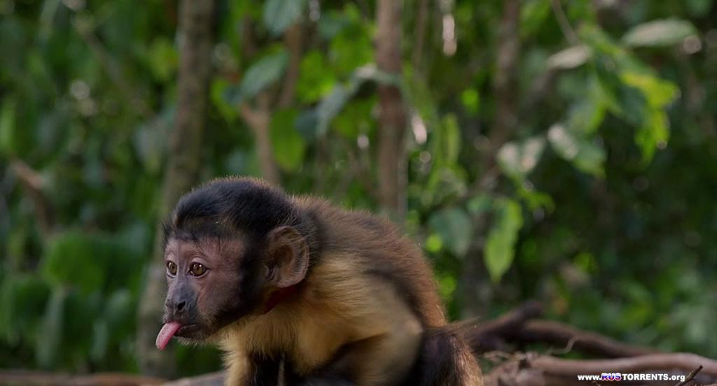 Амазония | BDRip-AVC
