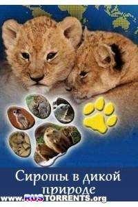 Сироты в дикой природе (1-3 серии) | SATRip