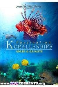 Коралловый риф: Охотники и жертвы | BDRemux 1080p