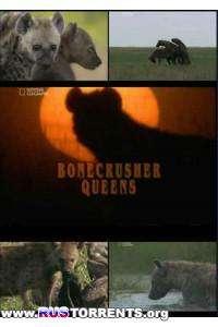 National Geographic: Гиена - царица хищников | HDTVRip