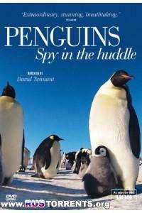 Пингвин: Шпион под прикрытием / BBC/  эпизоды 1 - 3 из 3/HDTVRip 720p