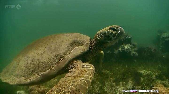 BBC: Мир природы. Ковчег сэра Аттенборо | HDTVRip | D