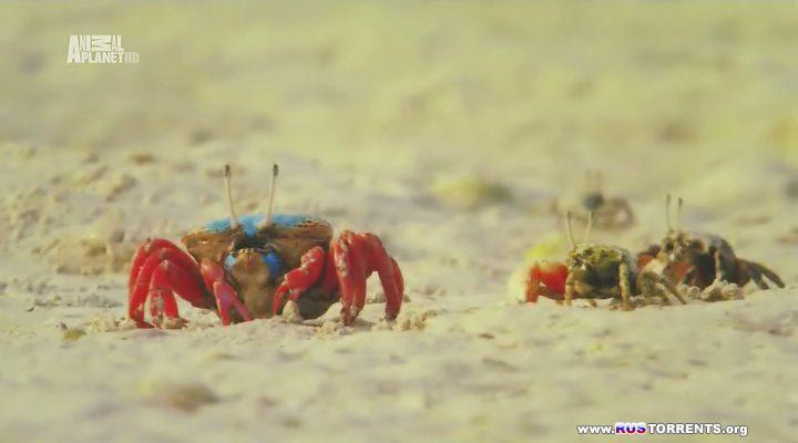 Animal Planet: ������������ ������� [01-08] | HDTVRip | D