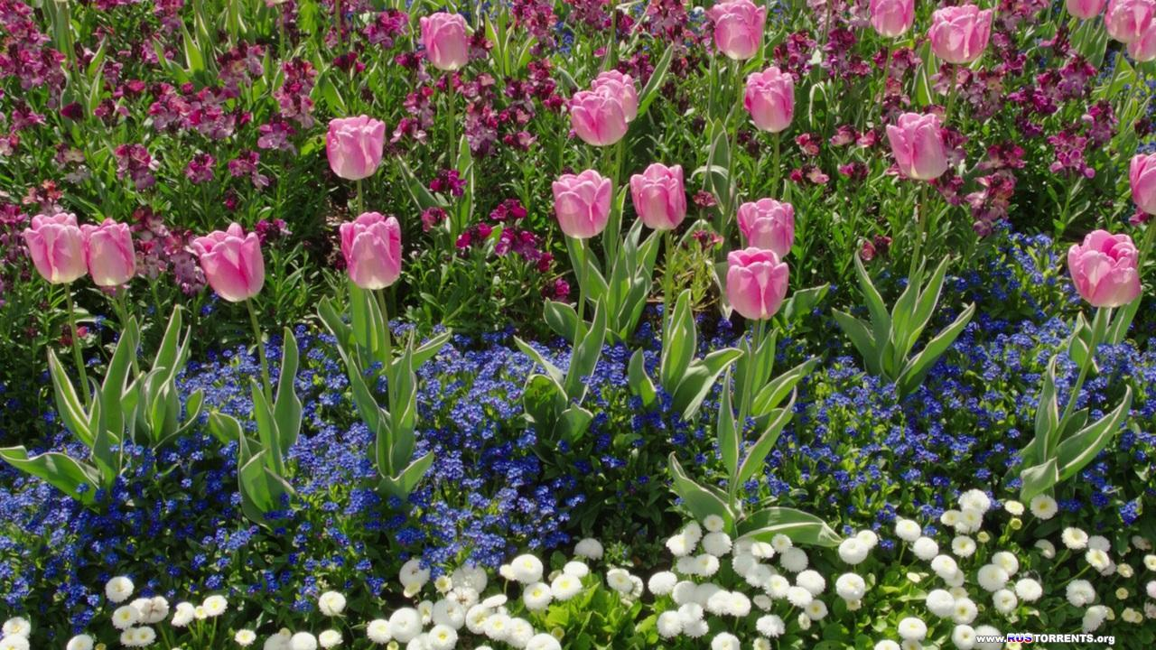 Царство растений [3 из 3] | BDRip 720p | A