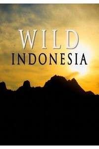 Дикая природа Индонезии [01-03 серия из 03] | HDTVRip 720p