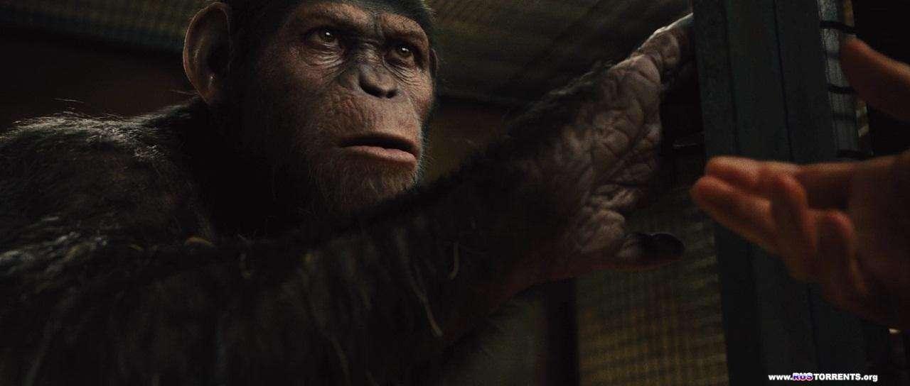 Восстание планеты обезьян | BDRip 720p | Лицензия