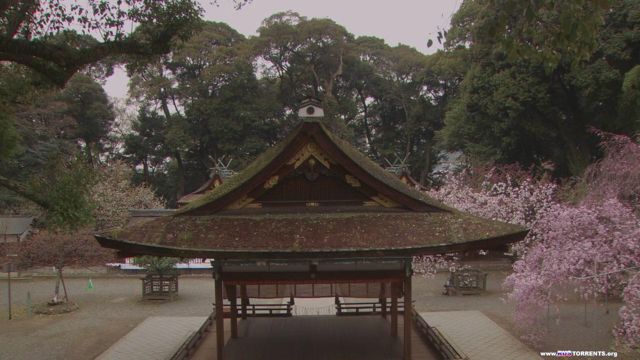 Виртуальное путешествие: Сакура - Возвращение