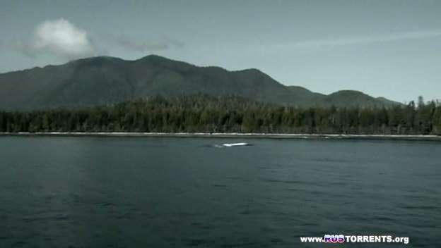 Темный остров