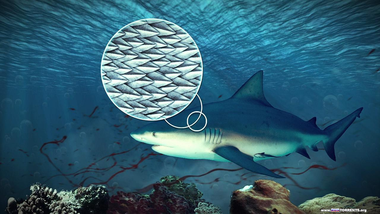 Хищники океанов 3D | BDRip 720p