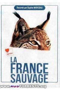 Дикая Франция | BDRip 1080p