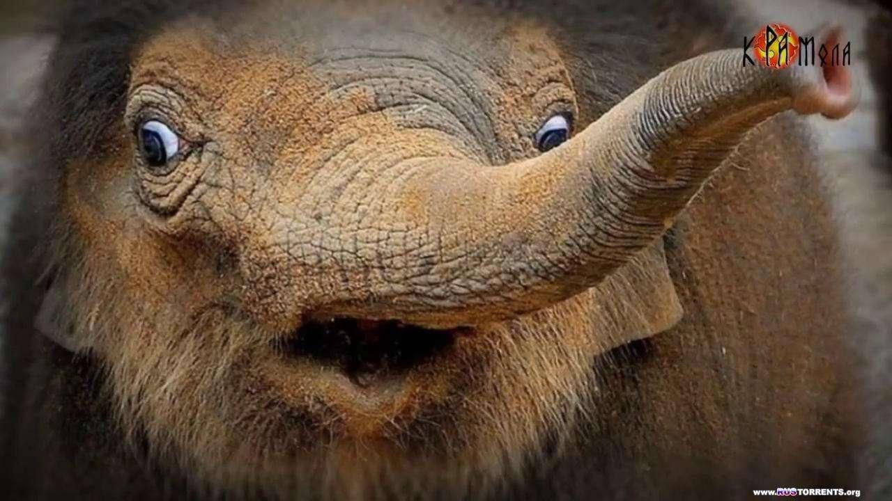 Когда вымерли мамонты? | HD 720p