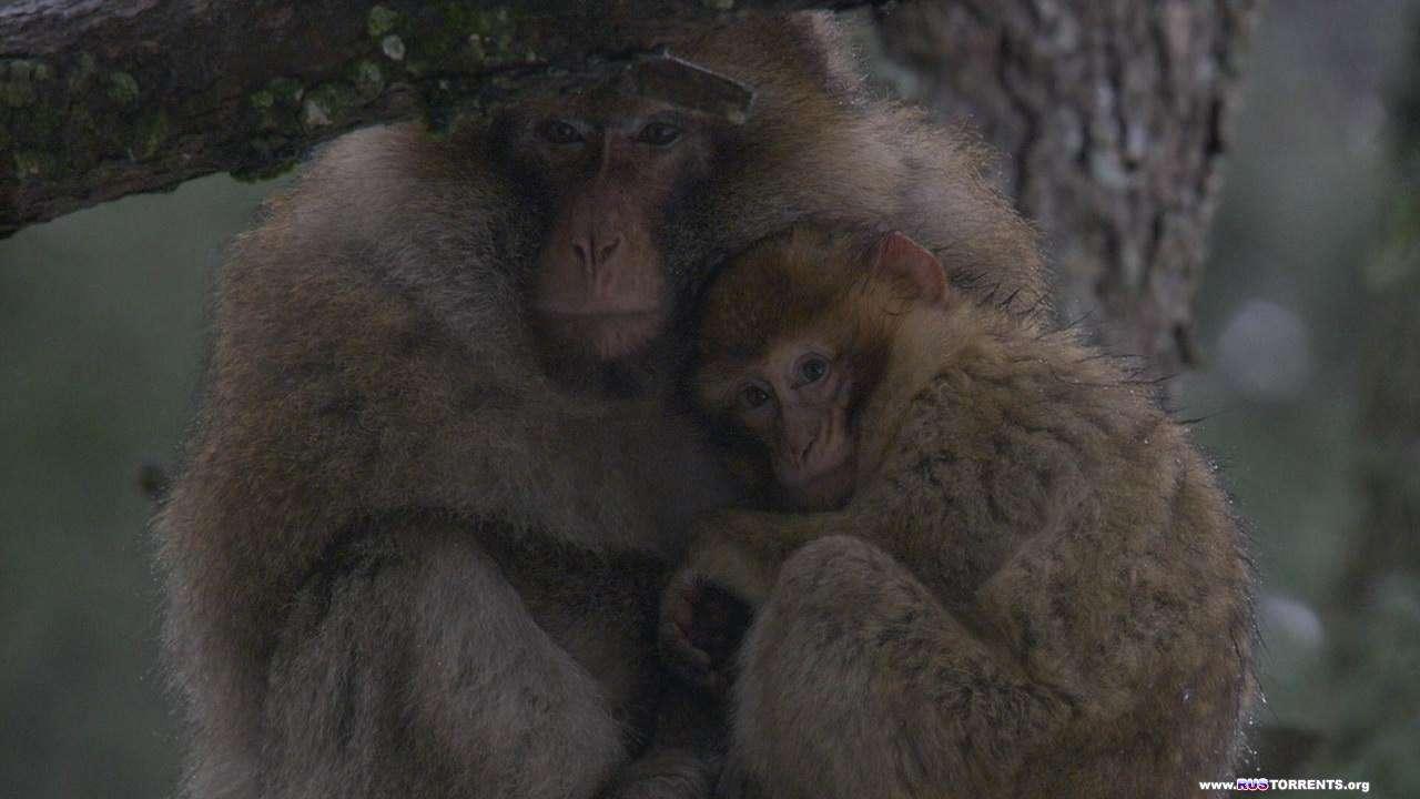 Африка 2013. Сахара | 1 сезон | 5 эпизод из 6 | BDRip 720p