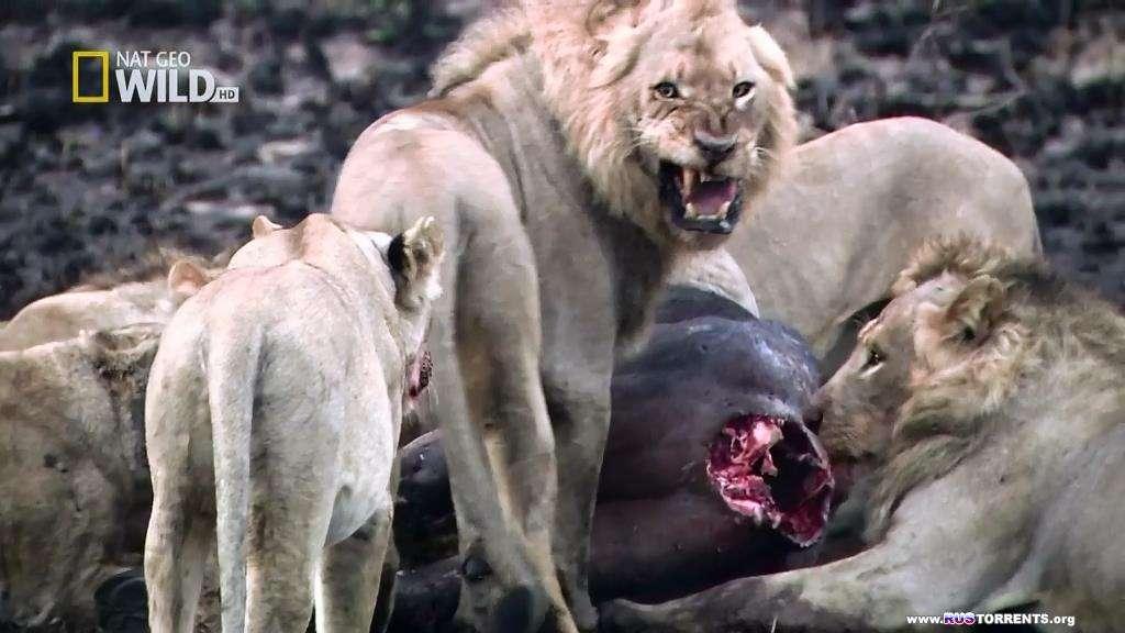 Большие битвы больших зверей | HDTVRip-AVC