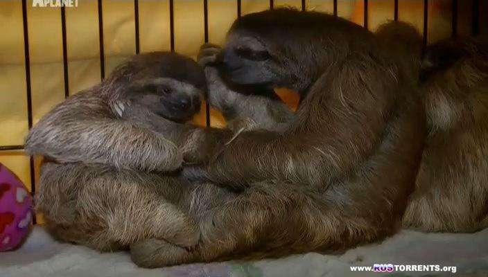 Знакомство с ленивцами (1-8 серии) | SATRip | P1