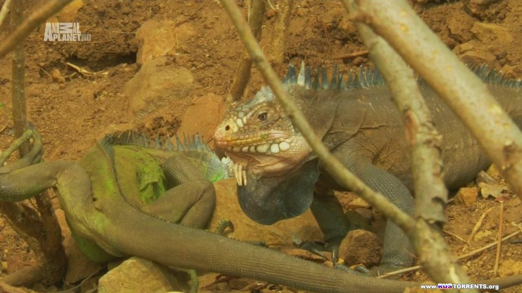 Animal Planet: Неизведанные острова [01-07] | HDTVRip-AVC| D