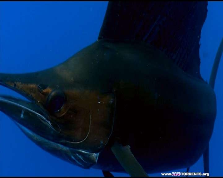 Планета-океан | DVD9 R5 | Лицензия