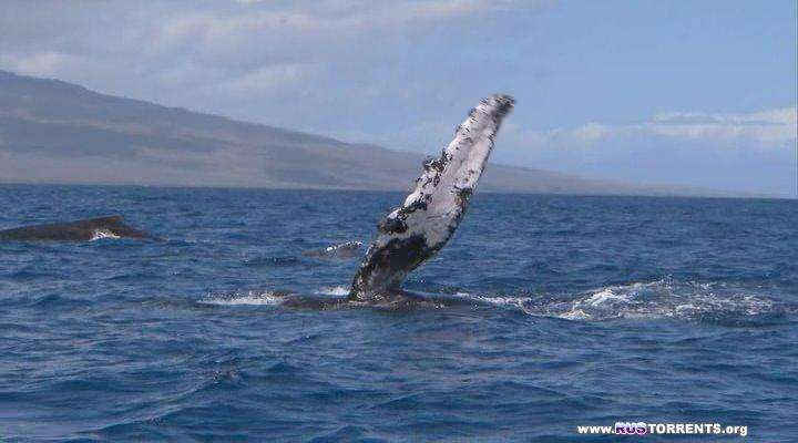 BBC: Морские гиганты [01-03] | BDRip | P2