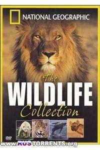 National Geographic. Коллекция живой природы: Ядовитый остров | HDTVRip | D
