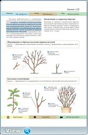 Обрезка садовых растений. Понятный самоучитель в иллюстрациях
