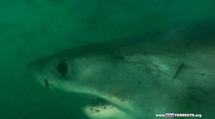 Дикая Южная Африка. По Следам Белых Акул | BDRip