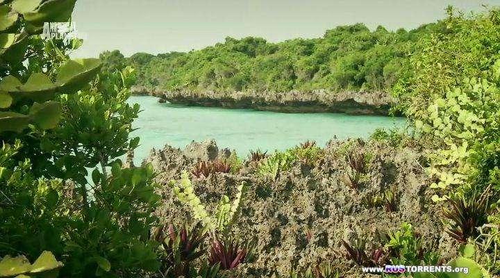Animal Planet: Неизведанные острова [01-08] | HDTVRip | D