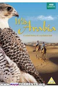 Дикая Аравия. Движущиеся пески | 1 сезон | 3 эпизод из 3 | HDTVRip 720p