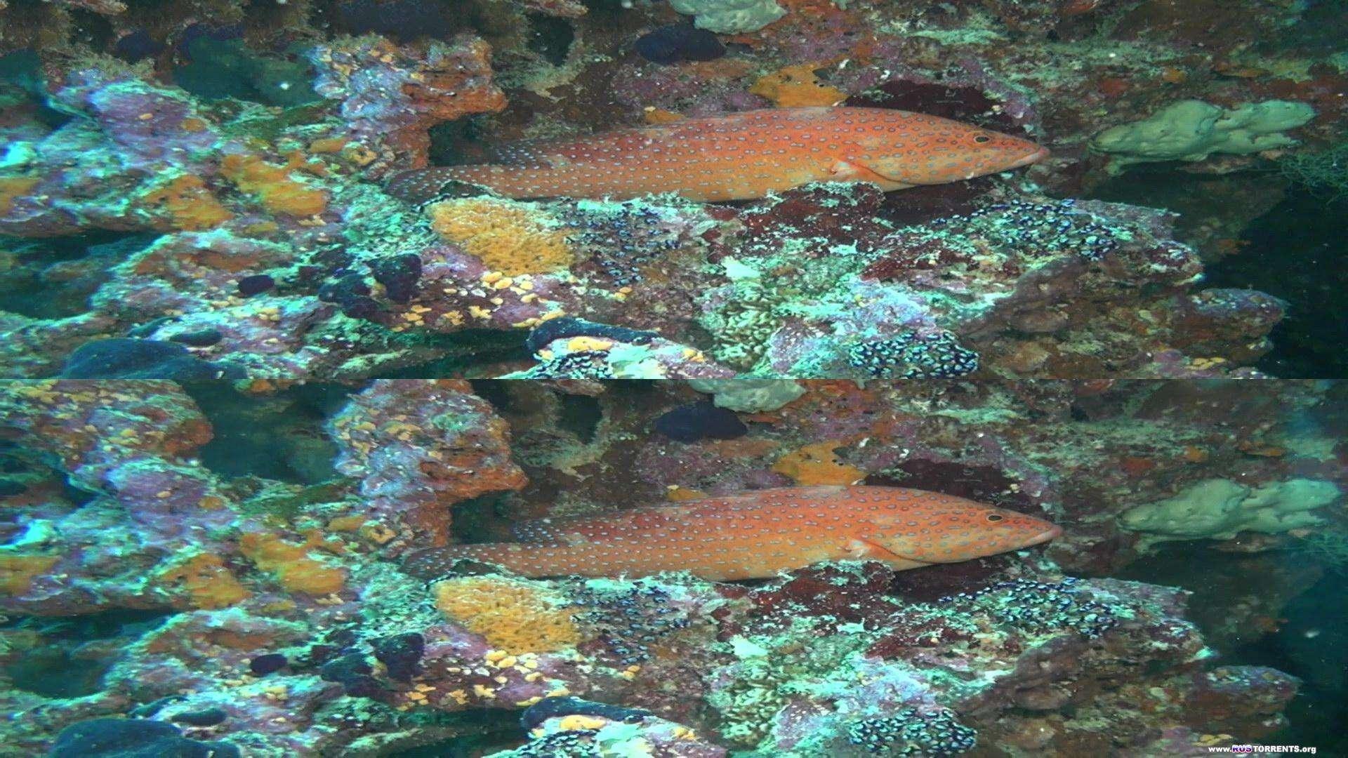 Коралловый риф - Том 2: Таинственный мир под водой 3D | BDRip 1080p | 3D-Video HOU
