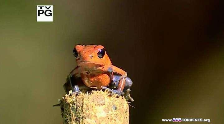 Удивительные лягушки | HDTVRip | A