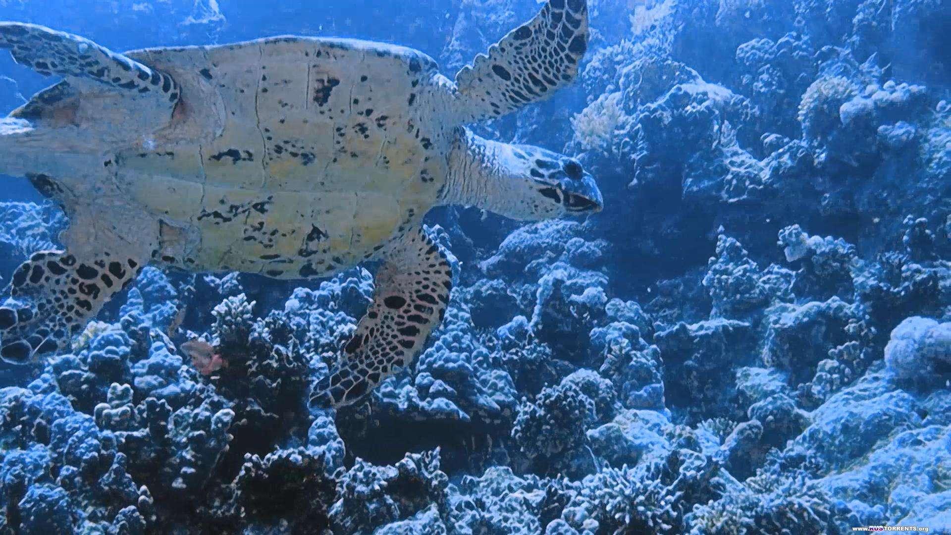 Коралловый риф 3D | BDRemux 1080p