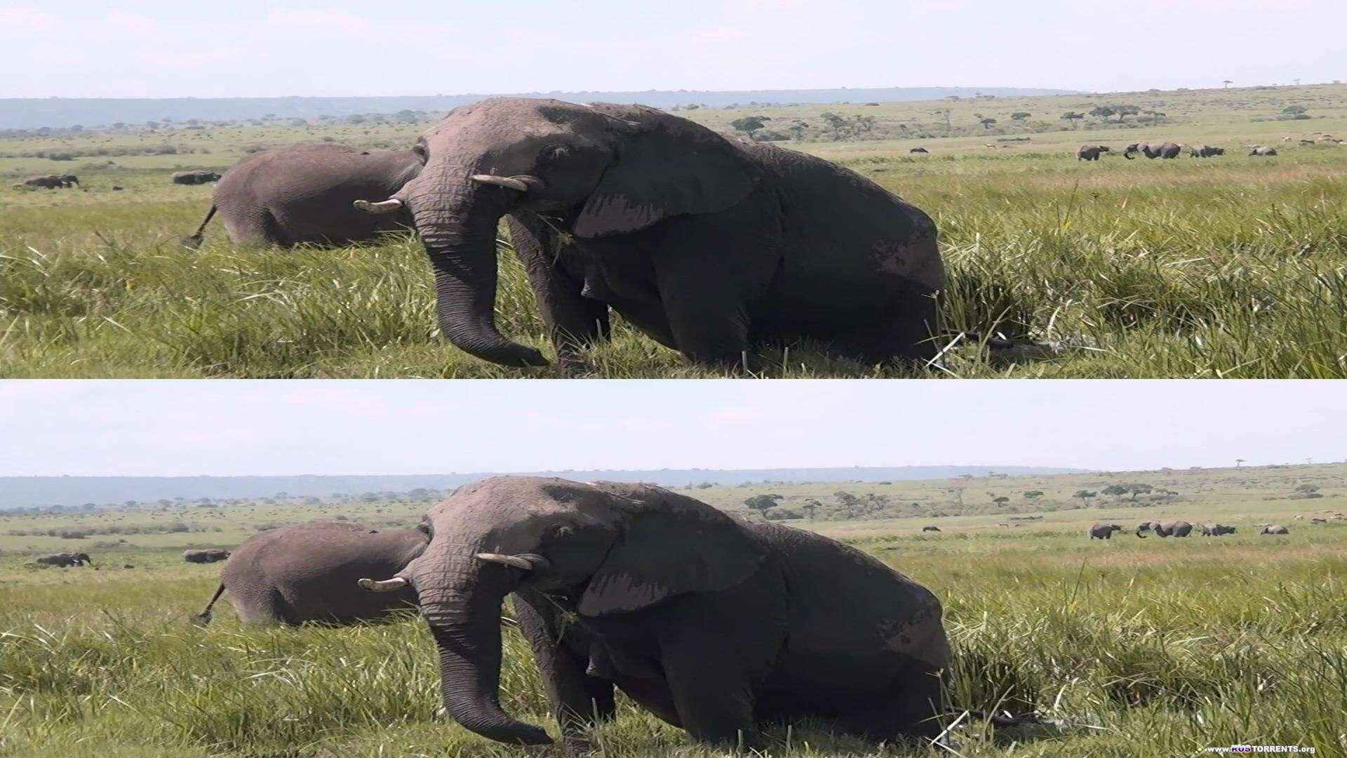 Удивительная Африка 3D | BDRip 1080p | 3D-Video HOU