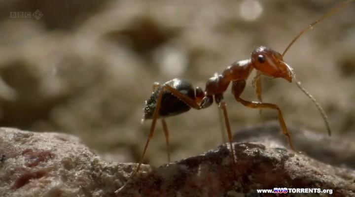 BBC: Планета муравьёв - Взгляд изнутри | HDTVRip